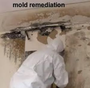 mold removal Blue Mound